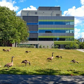 Geese graxing on the lawn beside the ENV3 building
